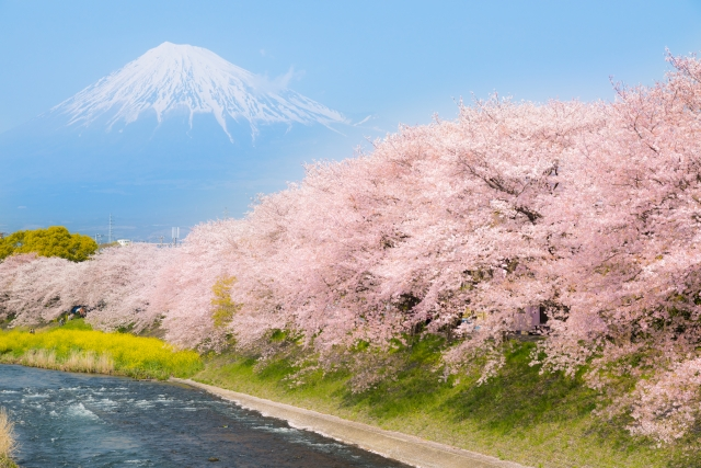 静岡は観光地としても人気!さらに住みやすい温暖な気候が魅力