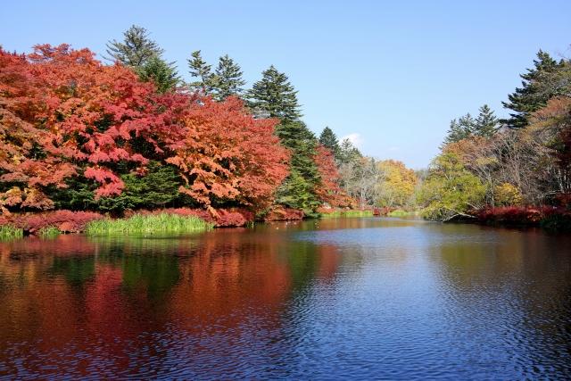 2 自然がいっぱいで美しい「雲場池」