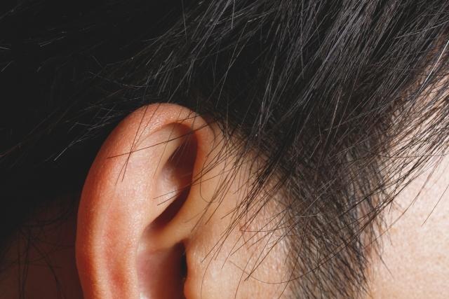 気になる部分③「耳毛」